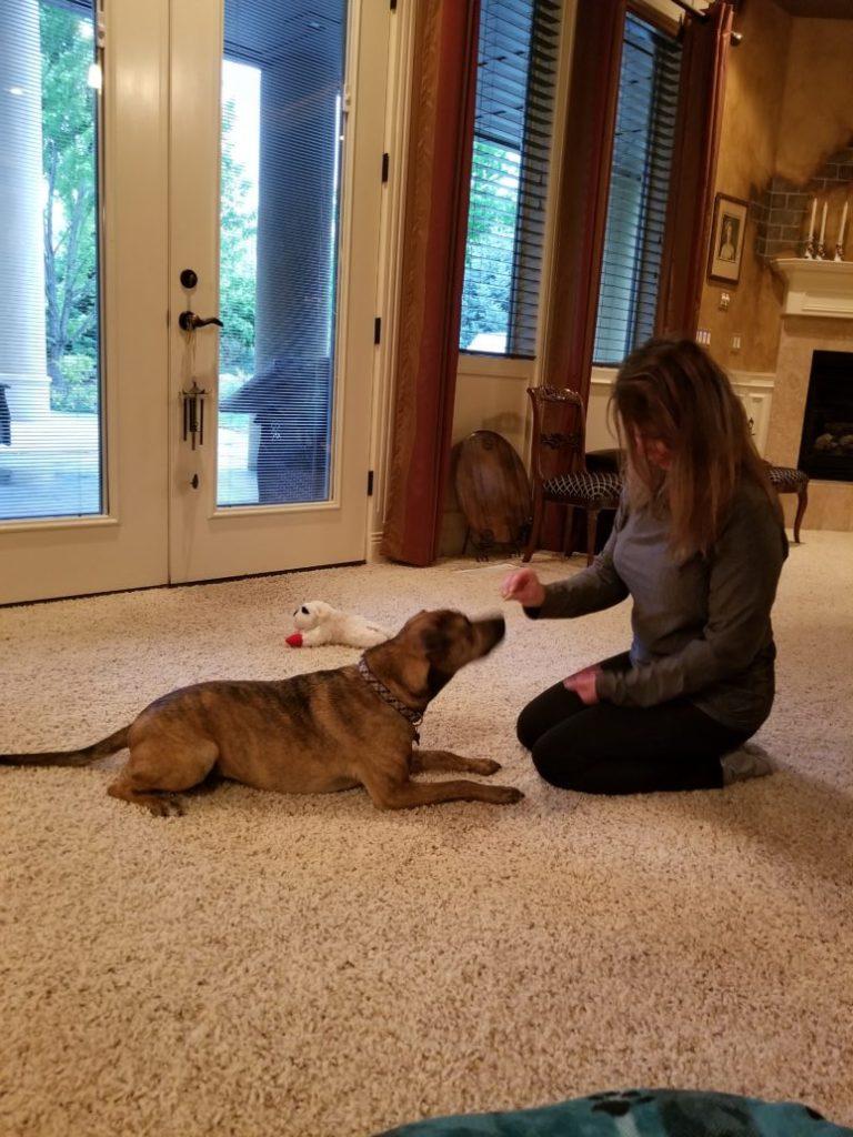 alliance dog training case study