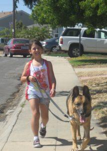 girl walking a German Shepherd dog