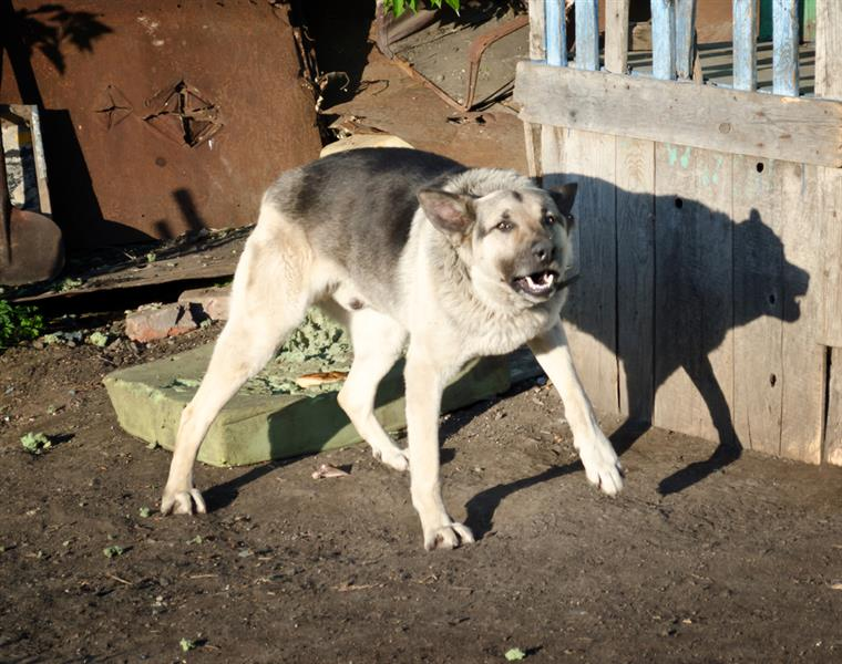 What\u2019s In A Name? Aggression vs. Fear in Dogs | Alliance ...
