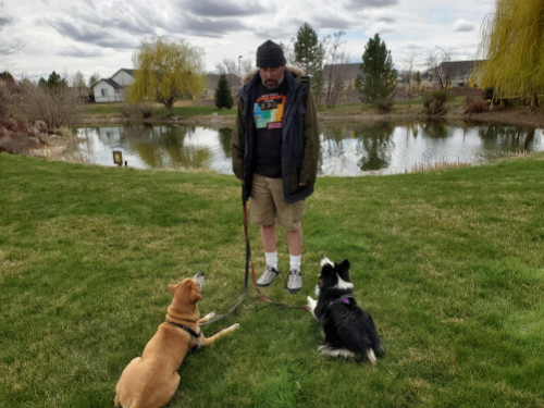 man with two dogs on a walk by a pond